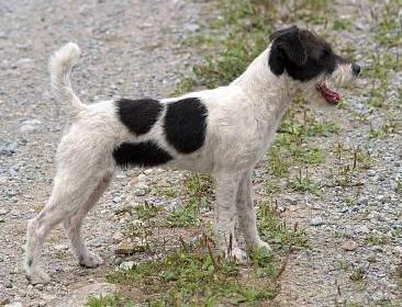 Dog Grooming Brantford Ontario